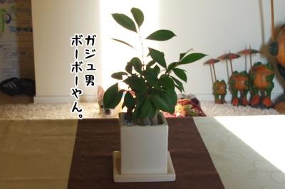 IMGP7186-1.jpg