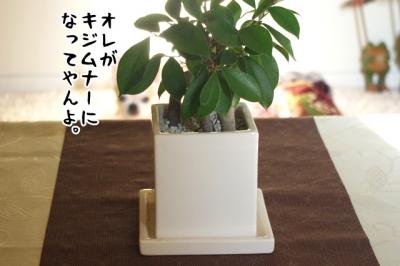 IMGP7187-4.jpg