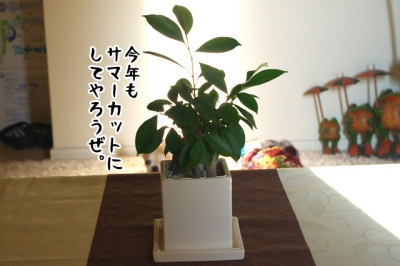 IMGP7189-3.jpg
