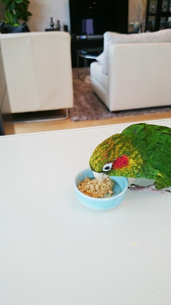 ソーク&フィード鳥さんの感想1