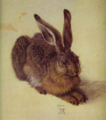 durer_rabbit1.jpg