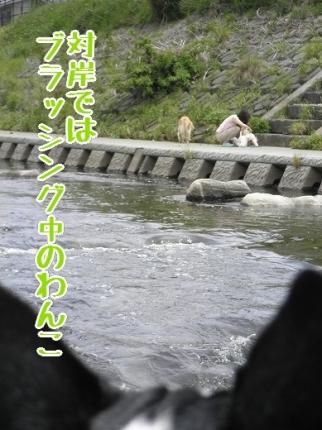 P5060013-1.jpg