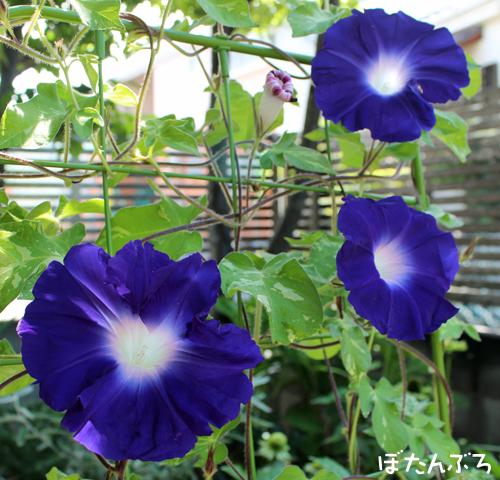 20140717_01.jpg