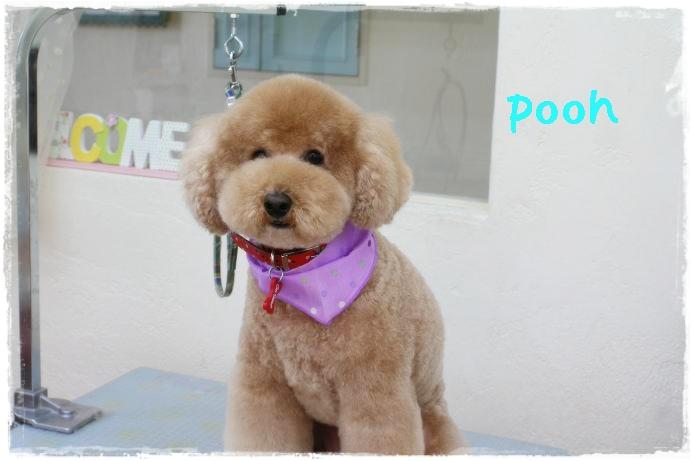 笠pooh