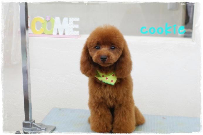江藤cookie