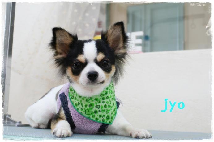 山本jyo