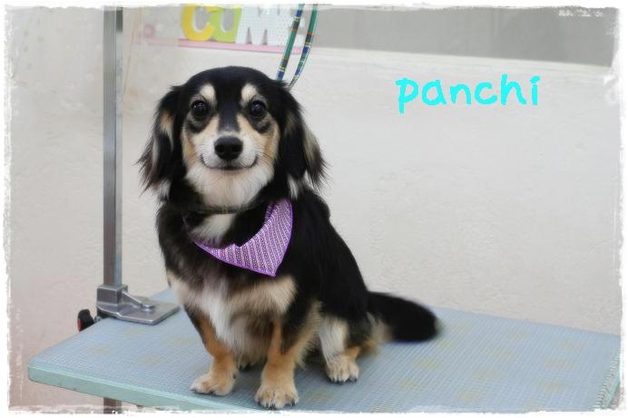 panchi山本