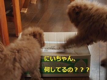 極上かるび 本日特売日 ~ Special meat is a sale today