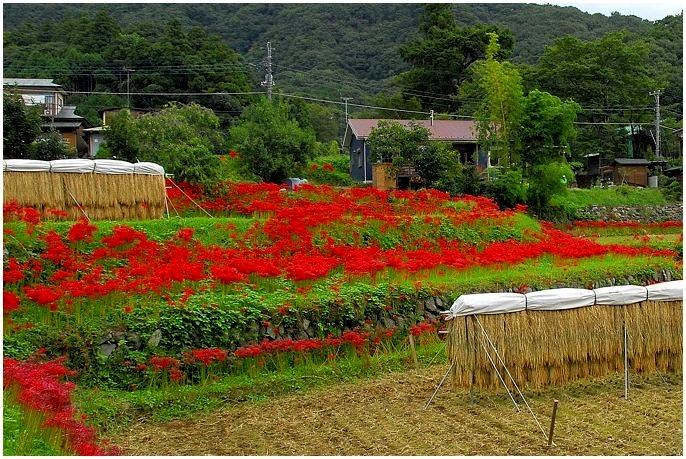 20140910takabeya001n.jpg