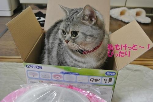 メイも箱好きか。。