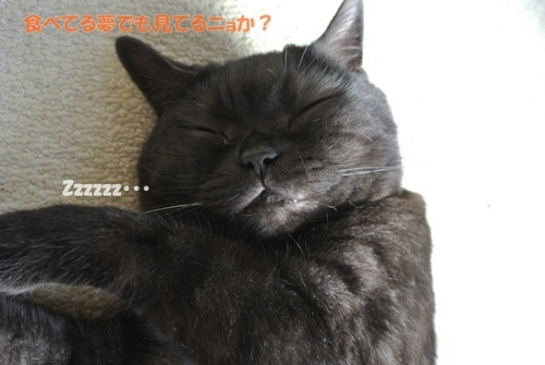 趣味は寝る事!