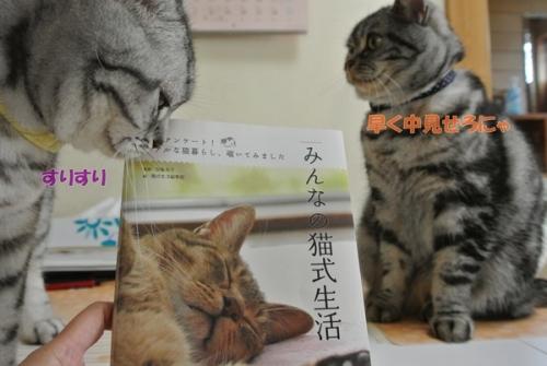 猫式生活1