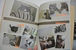 猫式生活3