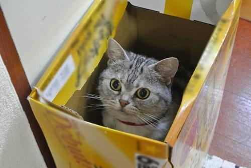 箱入りメイ