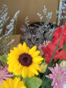 お花とネオ