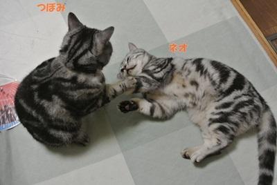 つぼ&ネオ