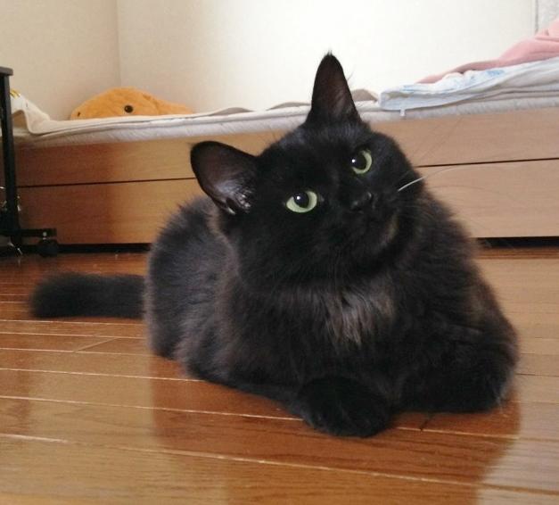 黒長毛クロちゃん♂