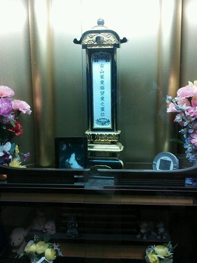 望愛-10