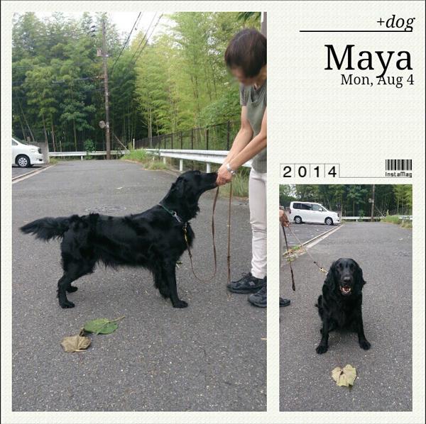 20140804+dog.jpg