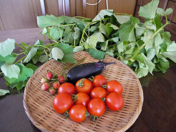 20140731収穫
