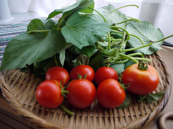 20140808収穫