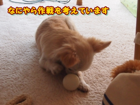blog3332a.jpg