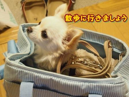 blog3378a.jpg
