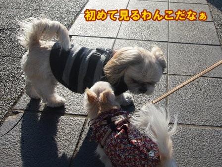 blog3493a.jpg