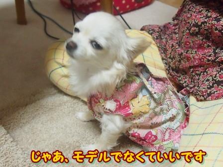 blog3551a.jpg