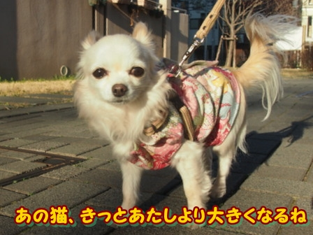 blog3592a.jpg