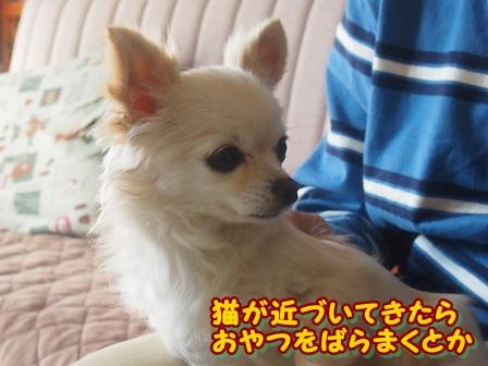 blog3605a.jpg