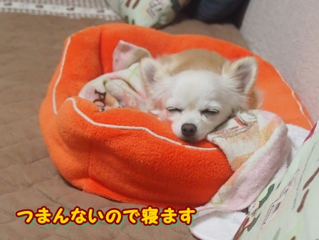 blog3659a.jpg