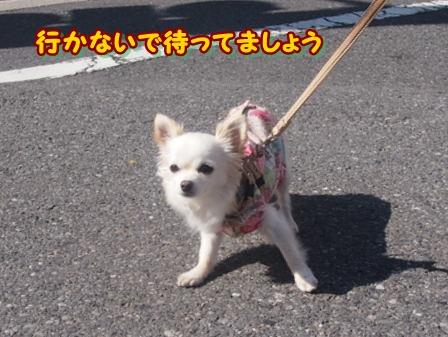 blog3691a.jpg