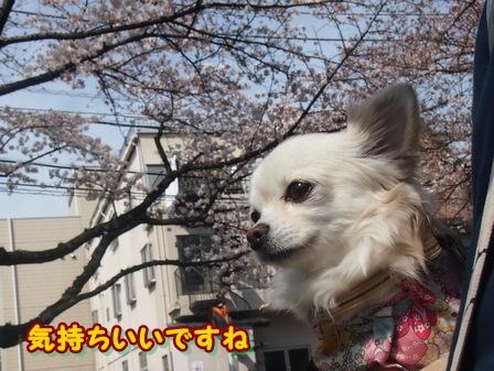 blog3729a.jpg