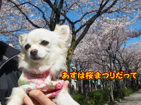 blog3778a.jpg