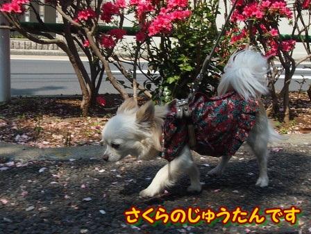 blog3883a.jpg