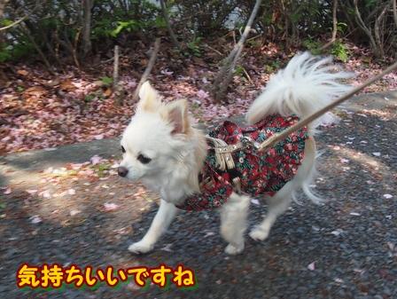 blog3884a.jpg