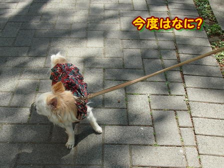 blog3892a.jpg