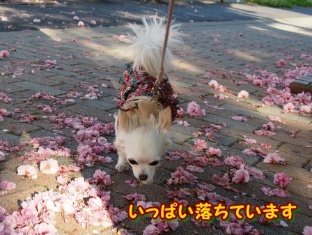 blog3898a.jpg