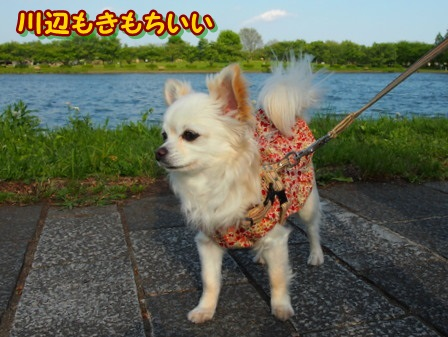 blog3948a.jpg