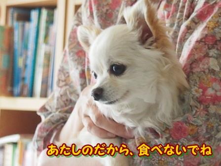 blog3985a.jpg