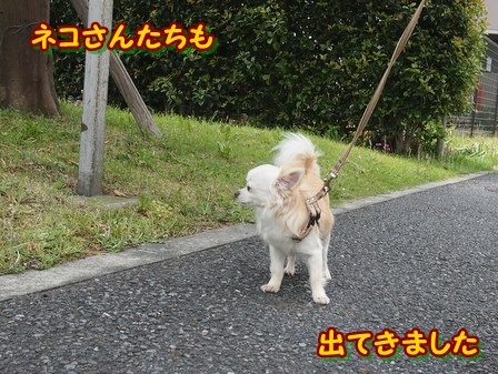 blog4058a.jpg