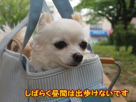 blog4059a.jpg