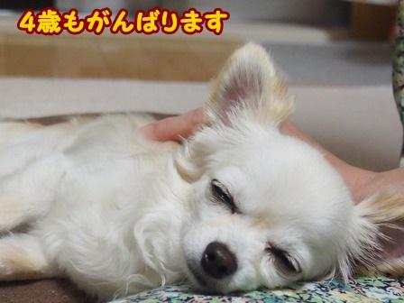 blog4100a.jpg