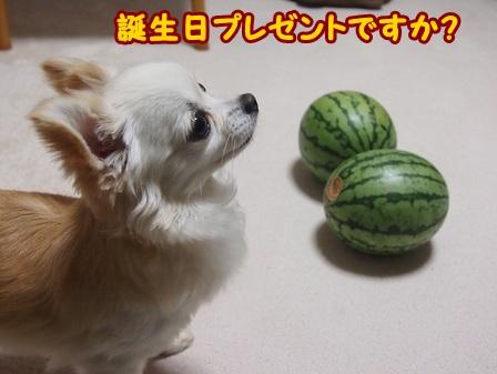 blog4106a.jpg
