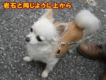 blog4136a.jpg