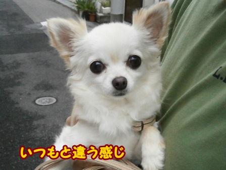 blog4139a.jpg