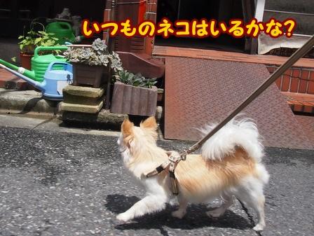 blog4169a.jpg