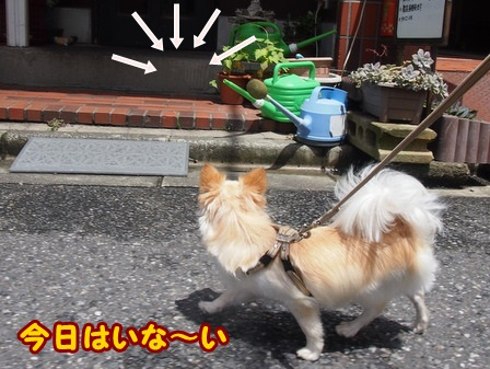 blog4170a.jpg