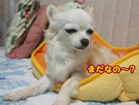 blog4182a.jpg